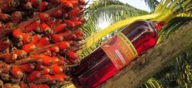 Com menor acidez, novo azeite de dendê agrega valor à culinária baiana