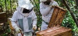 Polo da Rota do Mel desenvolverá apicultura no Médio São Francisco baiano