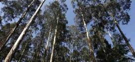 Nanotecnologia para desenvolver fertilizante de liberação lenta com matéria-prima de base florestal