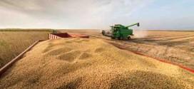 Produção brasileira de grãos na safra 2021/22 é estimada em 288,61 milhões de toneladas