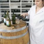 Bebida fermentada de maracujá-do-mato assemelha-se a vinho branco. Foto: Marcelino Ribeiro