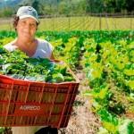 No âmbito do programa Agro + Mulher, Mapa, Embrapa e IBGE apuraram esses dados sobre mulheres rurais brasileiras. Foto: relacionada / reprodução Internet.