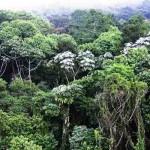 Segundo a pesquisadora, nos últimos cinco anos foi descrita, em média, uma espécie por dia no Brasil. Isso mostra que ainda há muitas espécies para serem descobertas ou descritas no país. Foto: reprodução.