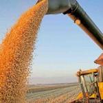Ciência aliada à sustentabilidade é o caminho para a segurança alimentar e, consequentemente, para a paz mundial. Foto: relacionada / reprodução