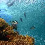 Segurança alimentar, estabilidade climática, biodiversidade, energias alternativas, biotecnologia e lazer são alguns dos benefícios oferecidos pelos mares à humanidade. Foto: Divulgação.