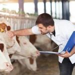 Sistema de Cadastro de Profissionais (Siscad) do CFMV aponta que 9.184 zootecnistas estão aptos e legalmente habilitados a exercer a profissão da Zootecnia no Brasil. Crédito https://www.educamaisbrasil.com.br /reprodução